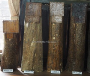Museum Kayu, destination, collection, Borneo, Kalimantan Timur, Kota Tenggarong, Panji Sukarame, nature, Obyek wisata, Tourism, tourist attraction, travel guide, 东加里曼丹, 博物馆, 旅游景点