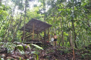 Medicinal Plants, jungle trekking, outdoors, Sungai, AIr Terjun, backpackers, destnation, Tegulang resettlement, Belaga, Kapit, Borneo, Malaysia, Tourism, travel guide, 沙捞越旅游景点