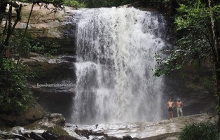 Medicinal Plants, jungle trekking, nature, outdoors, AIr Terjun, backpackers, destnation, Long Wat, village, Bintulu, Borneo, Dayak Penan, Tourism, travel guide, 婆罗州旅游景点