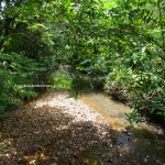 jungle trekking, authentic, backpackers, dayak bidayuh, native, Kampung Gumbang, Kuching, Malaysia, Pangkalan Tebang, 沙捞越, Tourism, traditional, Transborneo, village
