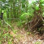jungle trekking, authentic, backpackers, dayak bidayuh, native, Kampung Gumbang, Borneo, Kuching, Pangkalan Tebang, 沙捞越, Tourism, traditional, wild fruits, village