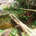 jungle, outdoor, backpackers, dayak bidayuh, native, Bau, Kuching, Borneo, Malaysia, Tourism, traditional, Transborneo, village
