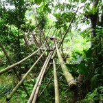 outdoor, authentic, backpackers, dayak bidayuh, native, Kampung Gumbang, Kuching, Borneo, 沙捞越, Tourism, traditional, travel guide, village, Bau