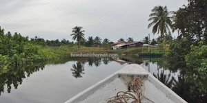national park, peat swamp forest, wildlife, adventure, nature, outdoor, river safari, Iban longhouse, Kampung Melayu, fishing village, Borneo, Tourism, Malaysia, travel guide, 沙捞越婆罗洲