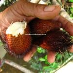 adventure, jungle trekking, nature, dayak bidayuh, native, Bau, Kuching, Malaysia, 沙捞越, Tourism, travel guide, village, local food, exotic delicacy,