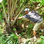adventure, backpackers, jungle trekking, nature, dayak bidayuh, native, Bau, Kuching, Borneo, 沙捞越, Tourism, travel guide, village, exotic delicacy,