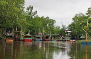 national park, peat swamp forest, wildlife, adventure, nature, protected species, Boat ride, proboscis monkey, Oriental pied hornbill, Kampung Melayu, Borneo, Tourism, tourist attraction, travel guide, 沙捞越婆罗洲,