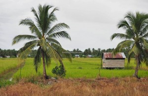 Kampung Sungai Mulon, native, ethnic, adventure, nature, backpackers, Borneo, fishing village, homestay, longhouse, Tourism, tourist attraction, travel guide, Maludam National Park,