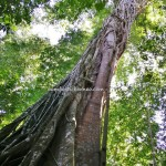 nature, mud volcano, Pulau Tiga, Survivor Island, jungle hiking, hidden paradise, backpackers, destination, Borneo, tourism, Kuala Penyu, tourist attraction, travel guide, crossborder, 婆罗洲旅游景点
