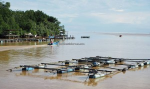 Ikan Tahai, Smoked fish, seafood, fishing village, authentic, traditional, malay village, nelayan, Borneo, Limbang, Tourism, travel guide, crossborder, 婆罗州, 老越砂拉越,