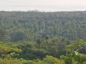 Bukit Babi, lookout point, adventure, nature, Kedungkang, Kalimantan Barat, Batang Lupar, Kapuas Hulu, Lanjak, obyek wisata, Sepandan, travel guide, Transborneo, Taman Nasional, biggest lake, 婆罗洲湖