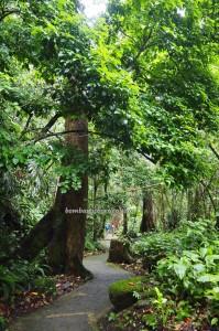 Rainforest Paradise, nature, outdoor, exploration, conservation, Crocker Range Park, backpackers, destination, Kampung Patau, Malaysia, Tourism, tourist attraction, travel guide, transborder, 坦布南沙巴, 婆罗洲旅游景点,