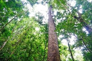 Tambunan, Rainforest Paradise, air terjun Mahua, adventure, exploration, conservation, Crocker Range Park, backpackers, Borneo, Interior Division, Tourism, tourist attraction, travel guide, transborder, 坦布南沙巴, 婆罗洲旅游景点,