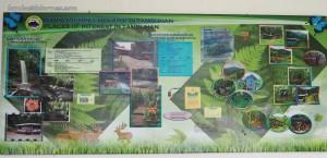 Mahua Rainforest Paradise, lodge, air terjun, waterfall, adventure, nature, outdoor, jungle trekking. backpackers, Borneo, Interior Division, Malaysia, Tourism, tourist attraction, 坦布南沙巴, 婆罗洲旅游景点