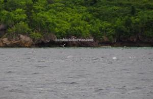 Teluk Sulaiman, Lamin Guntur Eco Lodge, adventure, nature, outdoor, Berau, Biduk-Biduk, Kalimantan Timur, island, Obyek wisata, Tourism, crossborder, backpackers, destination,