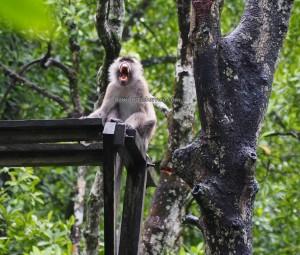 national park, Protected Animals, wildlife, adventure, nature, jungle trekking, backpackers, destination, Borneo, North Kalimantan, Obyek wisata alam, Tourism, tourist attraction, transborder, 婆罗洲, 旅游景点,