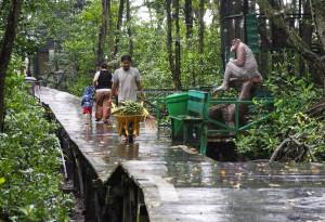 Mangrove Forest Conservation Area, national park, proboscis monkey, Monyet Belanda, Bekantan, wildlife, adventure, nature, jungle trekking, backpackers, Obyek wisata alam, Tourism, travel guide, Transborneo, 北加里曼丹, 旅游景点,