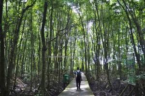 Kawasan Konservasi Mangrove, national park, proboscis monkey, Protected Animals, Bekantan, wildlife, backpackers, destination, Borneo, Kalimantan Utara, Obyek wisata alam, tourist attraction, travel guide, transborder, 婆罗洲, 旅游景点,