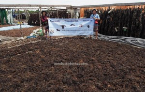 traditional, rumput laut, adventure, exploration, backpackers, destination, North Kalimantan, Island, village, Tourism, tourist attraction, travel guide, crossborder, 北加里曼丹, 婆罗洲旅游景点