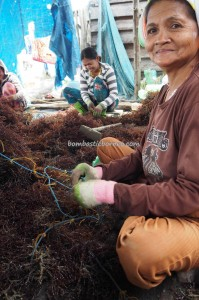 Tanjung Harapan, traditional, authentic, backpackers, Borneo, Indonesia, Kappaphycus alvarezii, red algae, Nelayan, village, Tourism, tourist attraction, travel guide, transborder, 北加里曼丹 海草旅游景点