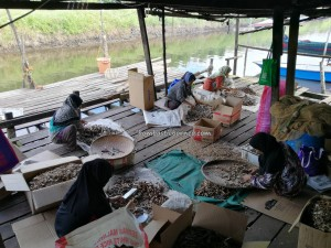Malay Fishing Village, authentic, traditional, backpackers, Borneo, Limbang, Malaysia, tourist attraction, travel guide, seafood, exotic delicacy, smoked fish, fishy snack, transborder, 老越旅游景点