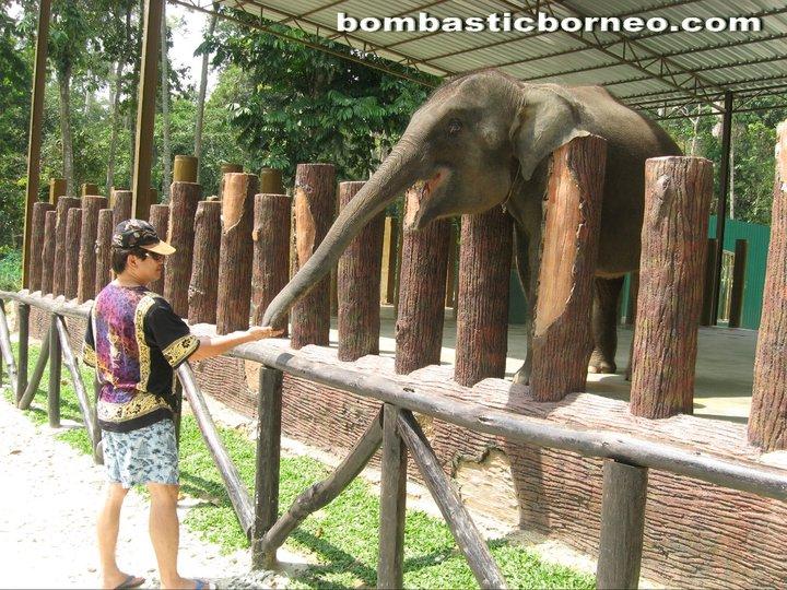 Malaysia, Pahang, nature, adventure, outdoor, native, Temerloh, elephant sanctuary, wildlife conservation, orang asli, zoo, deer land, triang, lanchang