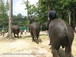 Malaysia, Pahang, nature, adventure, outdoor, native, Temerloh, elephant sanctuary, wildlife conservation, orang asli, zoo, deer land, triang, lanchang