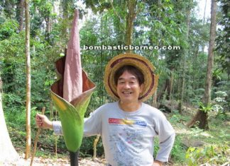 Borneo, amorphophallus hewittii, nature, malaysia, kuching, sarawak, kampung peninjau lama, tallest flower, trekking, stinky flower, mountain serumbu, Sir James Brooke cottage, village, land dayak, native, bidayuh, adventure, outdoor