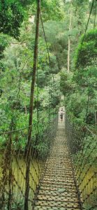 brunei, borneo, rainforest, canopy walk, nature, outdoor, trekking, suspension bridge, boat ride, waterfall, national park, wildlife, forest, outdoors, temuai, ulu temburong national park