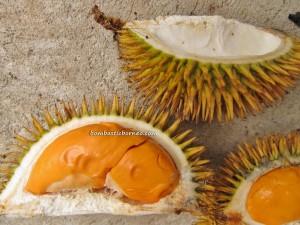 borneo, kalimantan, indonesia, sarawak, malaysia, local,  wild, durian, king of fruits, stinky, smelly, exotic