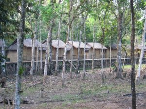 Nyobeng, Borneo, Culture, Traditional, Bidayuh, Gawai, Land Dayak, Kalimantan Barat, Sarawak, Sebujit, ritual, kuching, native, malaysia, indonesia, Bengkayang, village, baruk, homestay