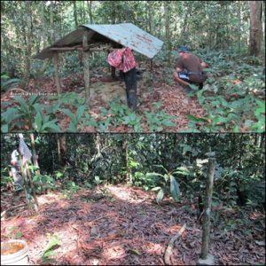 Borneo, Culture, Traditional, iban, sea Dayak, Sarawak, native, malaysia, sri aman, batang ai dam, nanga spaya, longhouse, ngajat, orang asli, authentic, Indigenous, lubok antu, microhydro