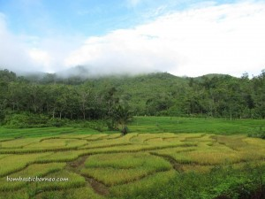 Bengkayang, gold mining, paddy fields, Kalimantan Barat, Borneo, mountainous, village, bupati,