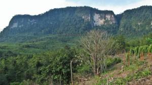 adventure, Balleh, Borneo, dayak, hiking, Hose mountain, hunting, Iban, jungle, Kapit, longhouse, Mambong, malaysia, Mujong, nature, outdoors, Pancur Gelanggang, Rajang river, Rejang, Sarawak, trekking, tribal, tribe, village, Waterfall, wildlife,