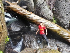 adventure, Balleh, Borneo, dayak, hiking, Hose mountain, hunting, Iban, jungle, Kapit, longhouse, malaysia, Mujong, nature plant, outdoors, Pancur Gelanggang, Rajang river, Sarawak, trekking, tribal, tribe, wildlife, Tunoh village,