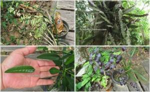 plants, Kalimantan Tengah, outdoor adventure, bike ride, Dayak Ngaju, Indonesia, jungle homestay, Kahayan River, Lais Lake, nature, Obyek wisata, Palangka Raya, Pulang Pisau, Taman Eden,