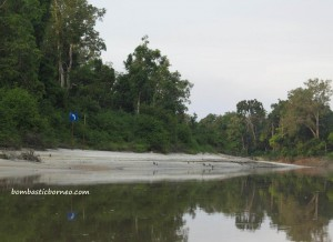adventure, Boat ride, Borneo, Central Kalimantan Tengah, endangered species, forest school, Indonesia, Muara Rungan river, nature, Nyaru Menteng, Obyek wisata, outdoor, Palangkaraya, Pulau, Pre-release island, village, wildlife