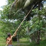 ancient, antique, Asajaya, chinese, copra, exotic fruit, farmhouse, kelapa, Malaysia, nature, outdoor, village, 雅沙再也, Sarawak, Kuching,