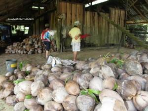 ancient, antique, Asajaya, chinese, exotic fruit, farmhouse, kelapa, Malaysia, nature, outdoor, village, 雅沙再也, Samarahan, Sambit, Kuching,