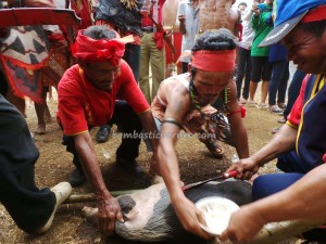 authentic, Dayak Bakati, baruk, Bengkayang culture, custom house, Gawai Padi, indigenous native, nyobeng, Obyek wisata, paddy harvest festival, ritual event, rumah adat, skulls, spiritual, traditional, tribal, tribe, Waterfall,