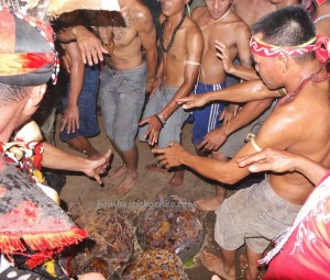 authentic, Dayak Bakati, baruk, Ethnic culture, indigenous, Indonesia, West Kalimantan Barat, native event, nyabankng, paddy harvest festival, Bengkayang, rumah adat, spiritual, traditional village, tribal, tribe,