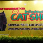 Bengals, Borneo, British Shorthairs, championship, DBKU, Household Cat, town, Macau Cat Club, Maine Coons, Pedigree Cat, Persians, pets lover, premiership, Youth And Sports Complex, Scottish Folds, 古晋市, 国际猫展, 猫城
