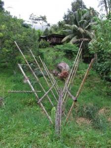 retreat, authentic, Border Peg 144, Borneo Heights, dayak bidayuh, indigenous, jungle trekking, Kampung sapit, Kuching, malaysia, orang asal, orang asli, rainforest, Sarawak, traditional, Organic farm, christian,