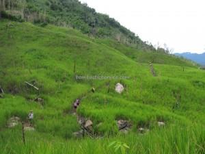 adventure, bengoh dam, dayak Bidayuh, Ethnic, indigenous, Kampung Ayun, Sting, Kuching, malaysia, native, nature, orang asal, outdoors, Padawan, paddy field, pepper farm, rainforest, Sarawak, traditional,
