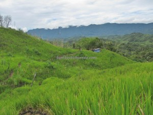 adventure, bengoh dam, dayak Bidayuh, Ethnic, indigenous, Kampung Ayun, Sting, Kuching, malaysia, native, nature, orang asli, outdoors, Padawan, paddy field, pepper farm, rainforest, Sarawak, traditional,