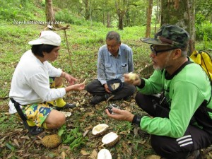 exotic delicacy, hiking, jungle, Malaysia, nature, Nutritious, outdoors, Pasir Pandak, pasir panjang, rainforest, Mount Santubong, Tourism, tourist attraction, trekking, Wild durian hybrid, wild fruits,
