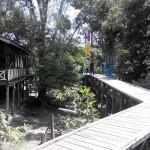 adventure, biodiversity, Boat ride, national park, green swamp vegetation, West Kalimantan Barat, kapuas hulu, Lanjak Deras, Nature Reserve Lake, Obyek wisata alam, orang utan, outdoor, Ramsar site, Tourism, tourist attraction, wildlife, traditional,