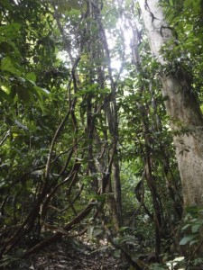 Asian Pit Viper, authentic, Borneo, hiking, jungle, Kuching, macaque, malaysia, mangrove forest, nature, rainforest, Taman Negara Bako, Teluk Assam Beach, Tourism, tourist attraction, travel guide, wildlife