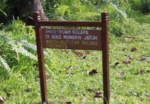 useful information, adventure, Asian Pit Viper, Bornean bearded pig, hiking, jungle, macaque, malaysia, mangrove forest, nature, outdoors, proboscis monkey, Sarawak, Taman Negara Bako, Teluk Assam Beach, Tourism, travel guide, wildlife