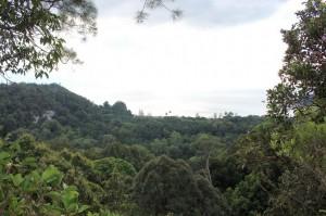 adventure, Bornean bearded pig, Borneo, hiking, jungle, Kuching, macaque, malaysia, mangrove forest, nature, outdoors, proboscis monkey, rainforest, Taman Negara Bako, Teluk Assam Beach, travel guide, trekking, wildlife